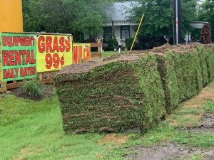 st augustine sod cost image