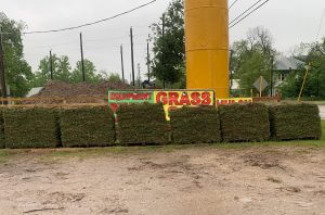 image of sod grass on pallets
