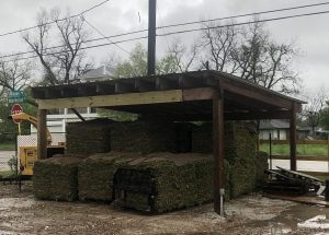 image of grass sod sold in Spring TX