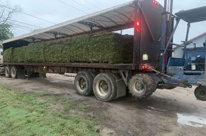 image of bulk grass sod delivery