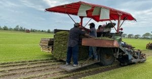 image of grass farm cutting pallets of grass