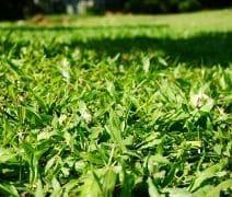 image of Bermuda grass lawn