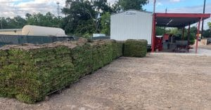 image of st augustine grass pallets