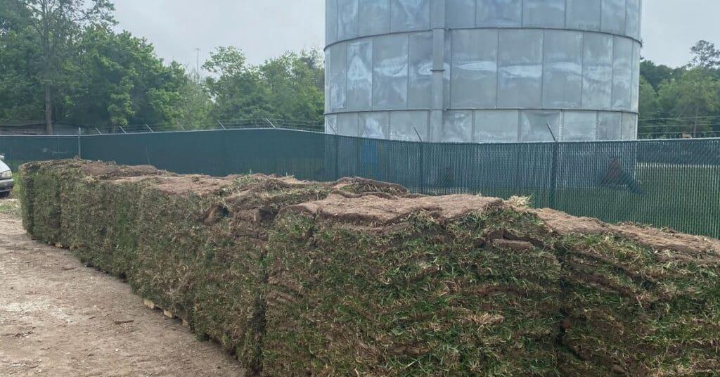 image of palmetto st augustine grass